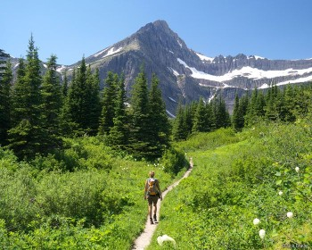 <p>Hiking along the Swiftcurrent Pass Trail in the Many Glacier area of Glacier NP - July.</p>